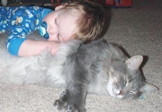 כיצד להפוך את החתול והתינוק לחברים טובים